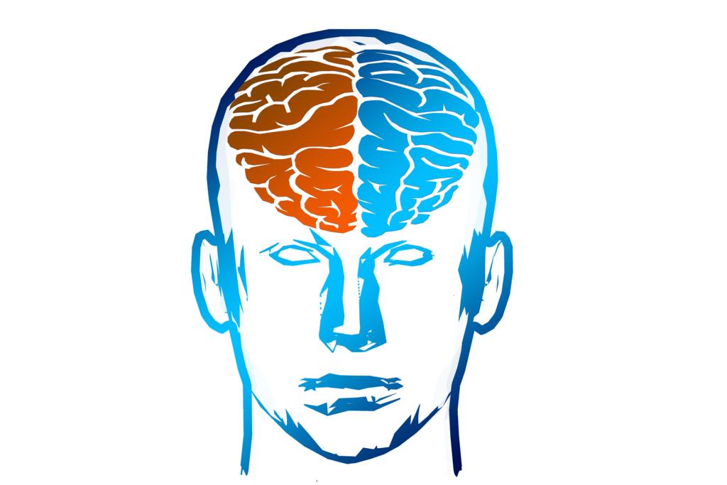 półkule mózgu prezentacja graficzna